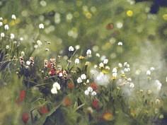 Wilderness-Rejoicing